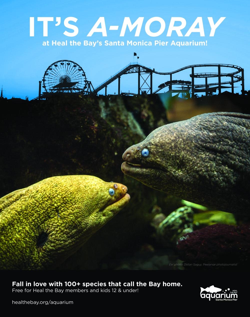 moray-eel-arg-ad-fv.jpg