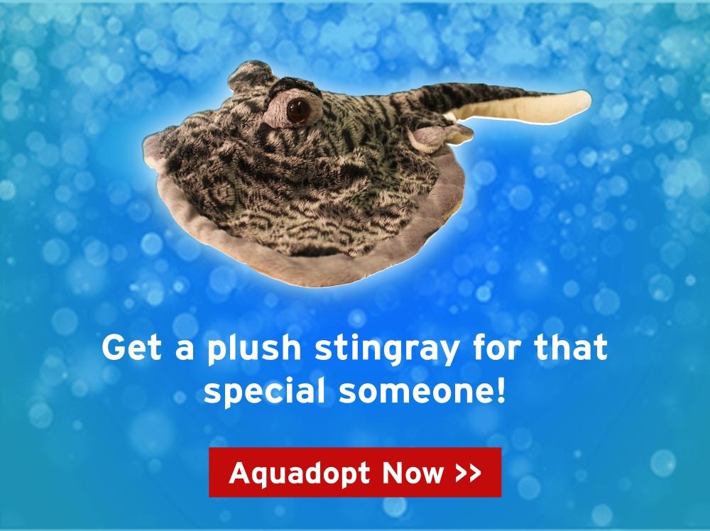 sintgray-popup.jpg